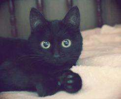 黒猫(ジジ)